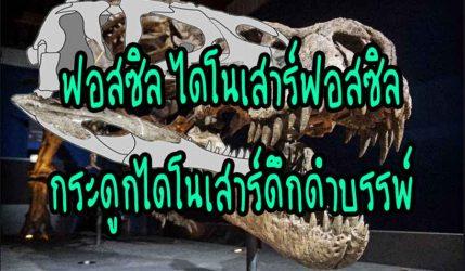 ฟอสซิล ไดโนเสาร์ฟอสซิลกระดูกไดโนเสาร์ดึกดำบรรพ์